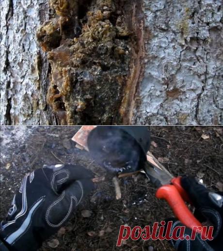 Клей из смолы и древесного угля