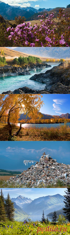 10 моих лучших кадров Алтая за 20 лет съёмки | Фотопутешествия | Яндекс Дзен