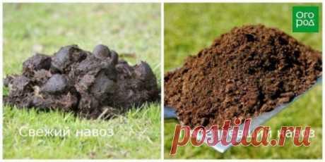 Сколько готовится компост, перегной, травяной настой и зреют опилки / Домоседы