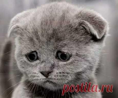Рассказываю коту, что я хозяин, а не он