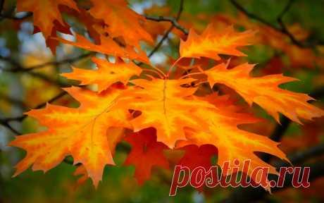 Поделки из природных материалов: поделки из листьев | Новостной портал вТЕМУ - всегда полезная информация