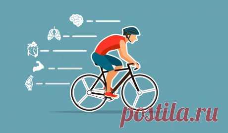 Как велосипед влияет на здоровье организма —и на мозг в частности? Велосипед — простой и эффективный способ поддержания здоровья. Регулярные и достаточно продолжительные тренировки (не менее 30 мин) положительно влияют не только на сердечно-сосудистую систему и легкие — но и улучшают работу мозга и помогают бороться с депрессией.