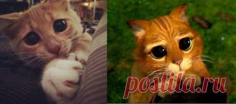 Картинки «Кот с Шрека. Фото с глазами» (27 фото) ⭐ Забавник