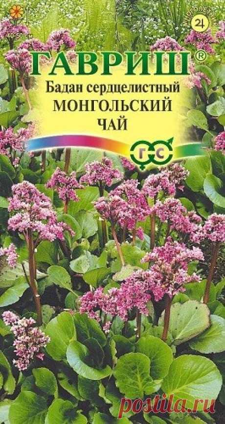 """Бадан сердцелистный """"Монгольский чай"""""""