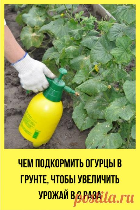Можно ли добиться хорошего урожая только при помощи органики и микроэлементов? Отвечаем в статье.