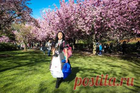 Фестиваль цветения сакуры в Нью Йорке: levik