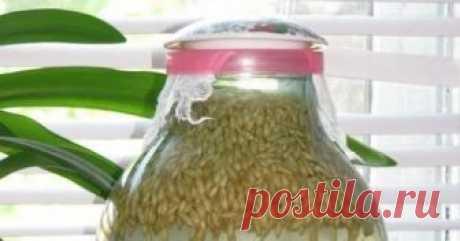 El kvas de la avena En las recetas viejas se encuentra una gran cantidad de los modos de la preparación de esta bebida admirable. En el tiempo moderno el kvas de ov...