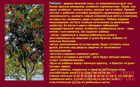 Магические свойства деревьев.