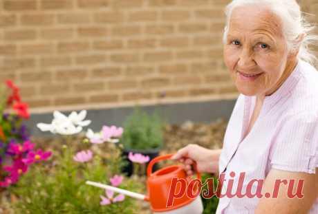 Чистотел поможет избавить сад и огород от противной тли. Обходимся без химии. - Советы и Рецепты