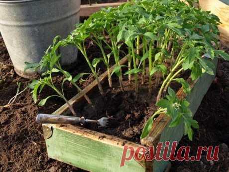 Поможем урожаю. Cредствa для защиты растений  1. Йод для капусты. В ведро воды добавить 40 капель йода. Когда начнет формироваться кочан, поливать капусту под растение по 1 литру. Йод аптечный – отличное средство для опрыскивания земляники перед цветением. Он способствует активному росту земляники и защищает ее от болезней. Рецепт раствора: 5-10 капель йода на 10 л воды. Показать полностью…