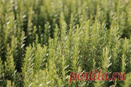 Какие лечебные травы помогут улучшить кровообращение в ногах   Волгоградская Правда