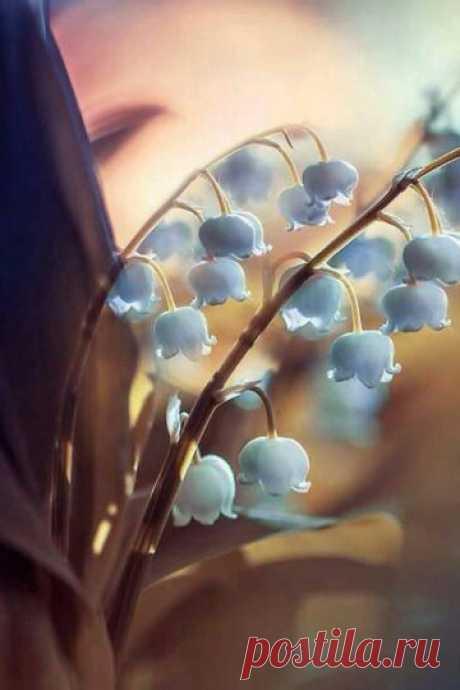 ...дышать весной, её цветами, Заглядывать в прозрачность луж И видеть небо с облаками И первых трав зелёный плюш.