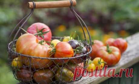 Как вырастить помидоры без рассады Надоело, что каждый год весной ваши подоконники заставлены плошками и горшками с сеянцами? Попробуйте вырастить томаты безрассадным способом. Помидоры, выращенные без пикировки и пересадки, развиваются быстрее, поскольку им не нужно адаптироваться к новым условиям...