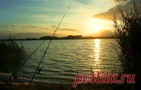 Весенний фидер – особенности, которые важно знать | Рыбалка для людей | Яндекс Дзен