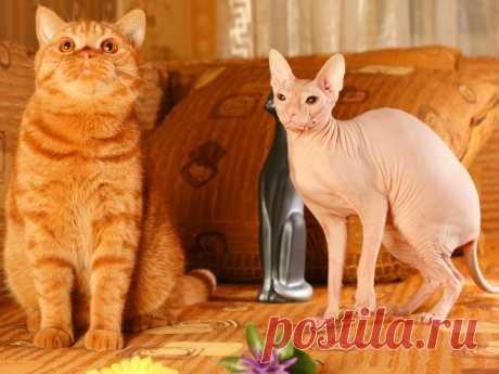 Самые редкие и необычные породы кошек / Питомцы