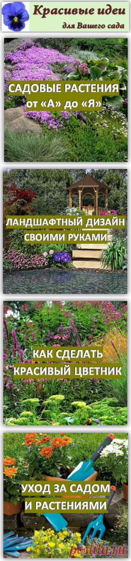 садовые цветы, клумбы и цветники своими руками / Красивые идеи для сада