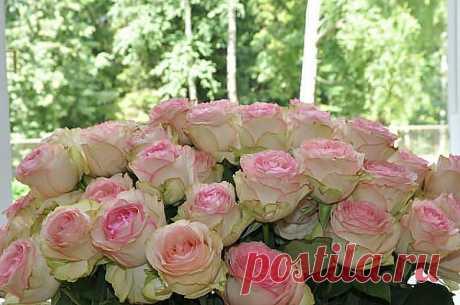 Люблю розы!
