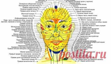 Как болезни наших внутренних органов связаны с реакцией кожи на лице и теле? | bomba.co