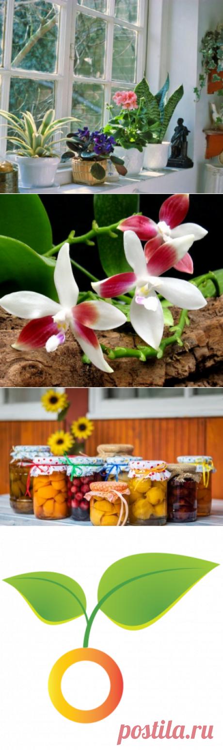 Орхидеи. Как выращивать орхидеи – уход и размножение — Ботаничка.ru