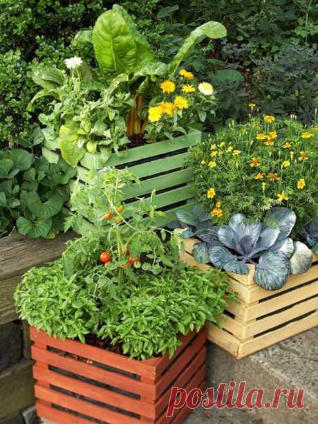 Контейнерный огород —на террасе, на балконе, в квартире!  Существуют специальные методики по выращиванию овощей в ящиках и для владельцев участков земли — такое овощеводство облегчает возделывание земли, обработку грядок и повышает урожайность культур.
