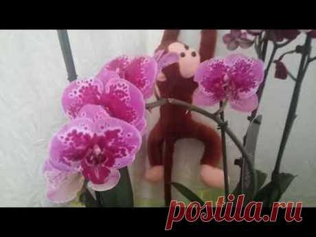 Что нужно делать чтобы орхидеи цвели безпрерывно.!!!!!!!!!!