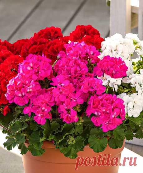 5 лучших комнатных растений для ленивых с красивым цветением — Садоводка