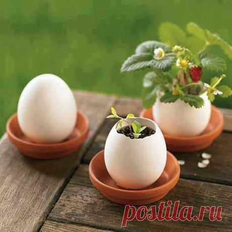 (1) Album 82: Kreatív tojások - uova - oeufs - eggs