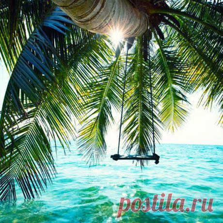 пальма океан