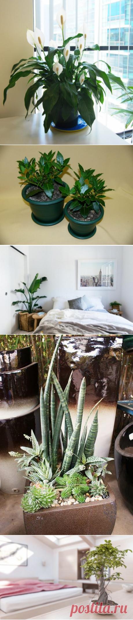 9 домашних растений, которые рекомендуется разместить в спальне / Домоседы