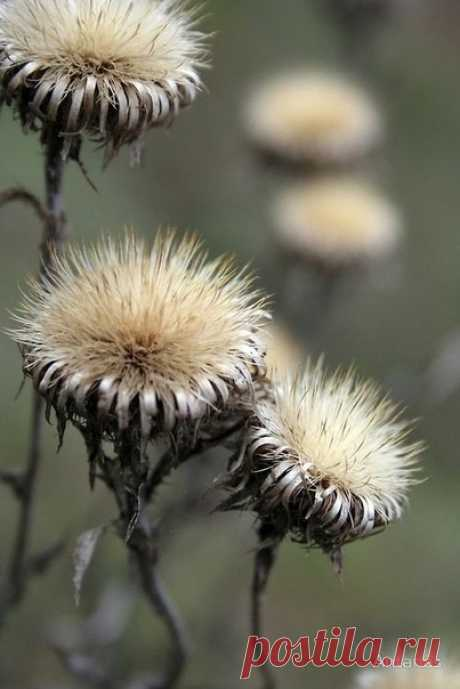 Пожелай нам, Осень, веры и терпенья, Весточек хороших, добрых перемен.. Не лишай поспешно сердце вдохновенья, Огради от грусти, боли и проблем!