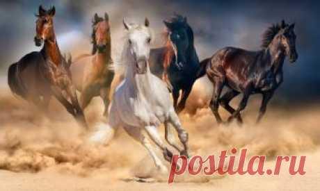 80 Frases de caballos | Poderosas y bellas como ellos [Con Imágenes] Las mejores frases de caballos. ✅ Tan poderosas como estos bellos animales, uno de los compañeros más importantes del ser humano. ¡Léelas todas y verás!