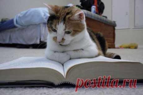 Ну, очень умный кот!