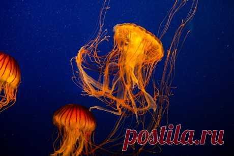 Сезон ядовитых медуз в Тунисе. В этот период лучше там не отдыхать. | Путешествуй по миру легко! | Яндекс Дзен