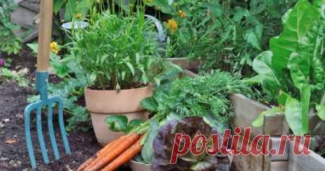 """Смешанные посадки: выбираем лучших соседей для растений Некоторые непривередливые растения могут благополучно развиваться в окружении любых зеленых """"собратьев"""". Но далеко не все культуры такие неразборчивые в выборе соседей. Давайте узнаем, что с чем лучше сажать, чтобы растения не угнетали друг друга."""