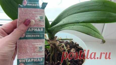 Янтарная кислота для подкормки растений...