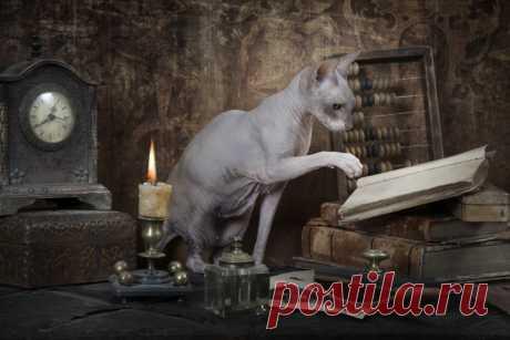 Как общаться с котом? Мифы и заблуждения | Животные