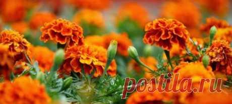 Dachadekor: kitchen garden, giving, landscaping
