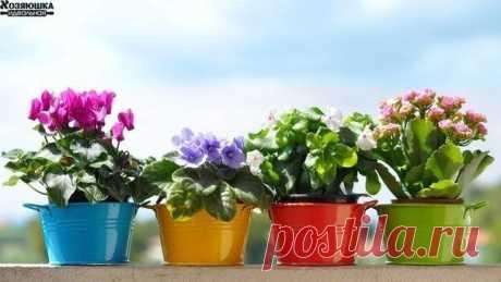 ЧЕМ ПОДКОРМИТЬ КОМНАТНЫЕ ЦВЕТЫ  Секрет роскошного комнатного цветника прост: растения нужно хорошо подкармливать, иначе не дождаться ни пышной листвы, ни хорошего цветения. Жесткая диета, когда растение длительное время испытывает нехватку питательных веществ, обычно приводит к заболеванию – ведь сил для сопротивления у растения нет. Но как правильно составить меню для зеленых питомцев, учитывая их разные вкусы?  1). Практически все растения любят сахар (а кактусы вообще в...
