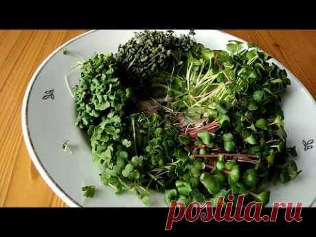 Эксклюзивный рецепт яичницы с микрозеленью