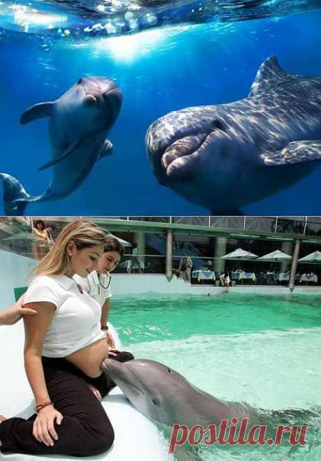 В Индии дельфинов признали личностями | Уши, лапы, хвост