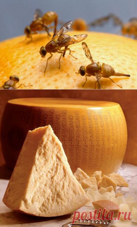 Как дрозофила людям сыр подарила