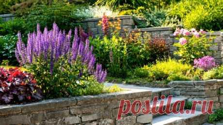 10 критериев подбора растений для декоративных композиций