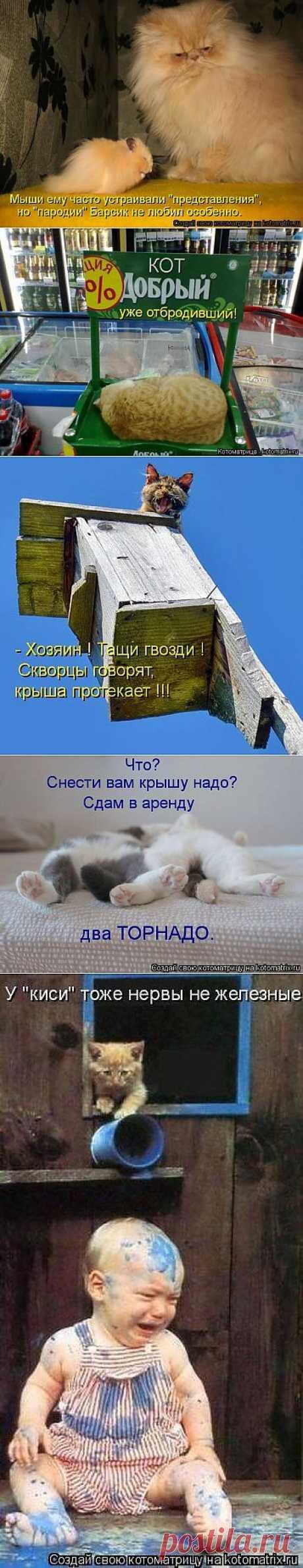Лучшие котоматрицы недели - 50 ФОТО(17.06.2013).