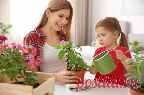Лимон или хлорофитум? Какие растения выбрать длядетской комнаты Утверждение, что дети – цветы жизни, не бесспорно, но очень близко к истине. В таком случае логично окружить их цветами настоящими, тем более что соседство с комнатными растениями будет полезно любому ребёнку. Какие лучше всего подойдут для детской?