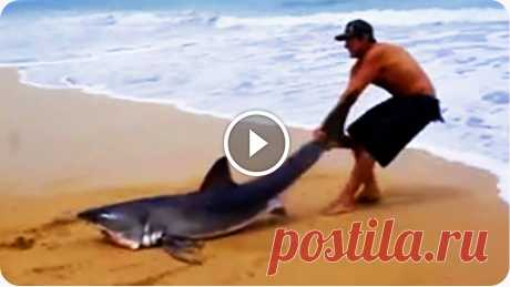 Great White Shark Rescue on the Beach