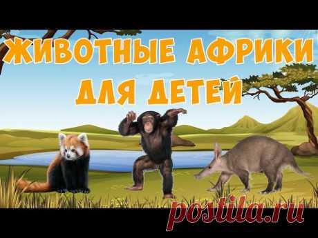 Африканские животные    карточки Домана   Раннее развитие детей   Природа - YouTube