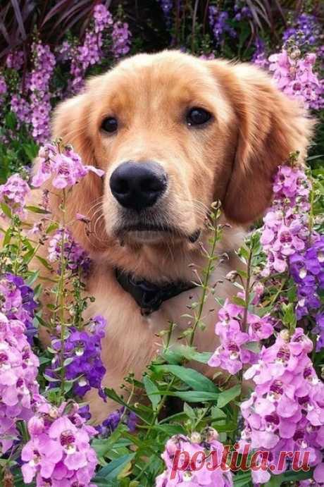 Собаки — удивительные существа. Они любят нас без условий. Собаки подают нам пример, как надо жить.  Гилда Раднер