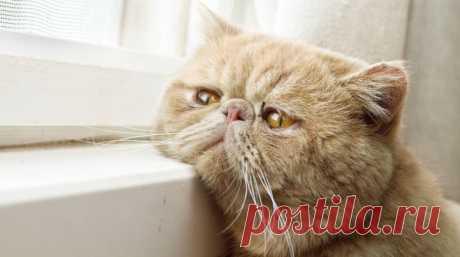 ¿En que los secretos de la longevidad de las gatas? | los animales