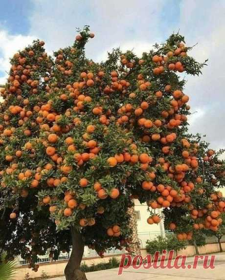 Сколько апельсинов! 😍