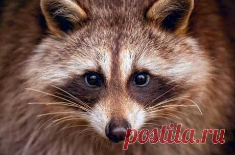 Гороскоп хищниц: на какое хищное животное ты похожа?